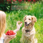 Dolnośląski Magazyn Kulinarny KOCIOŁ – numer XXIV